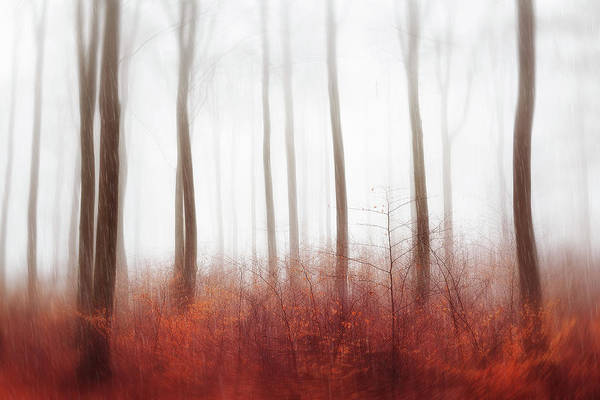 Wall Art - Photograph - Endless Woods by Gustav Davidsson