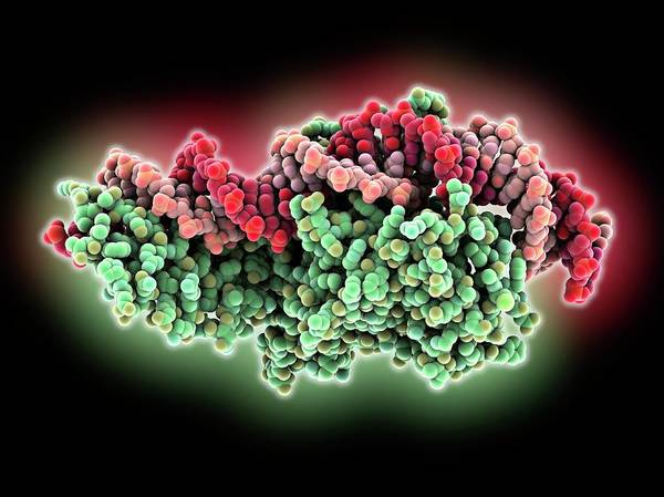 Restriction Photograph - Endonuclease And Dna by Laguna Design