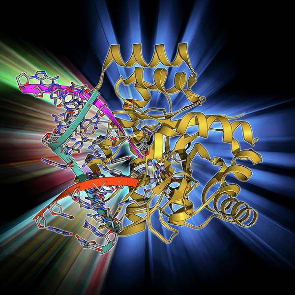 Restriction Photograph - Endonuclease Iv Molecule by Laguna Design