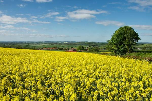 Photograph - English Countryside by Stephen Taylor