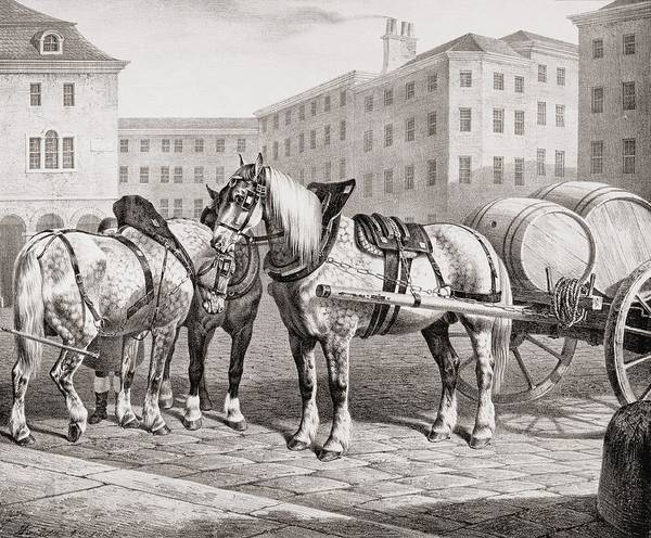 Cart Drawing - English Farm Horses, 1823 by French School