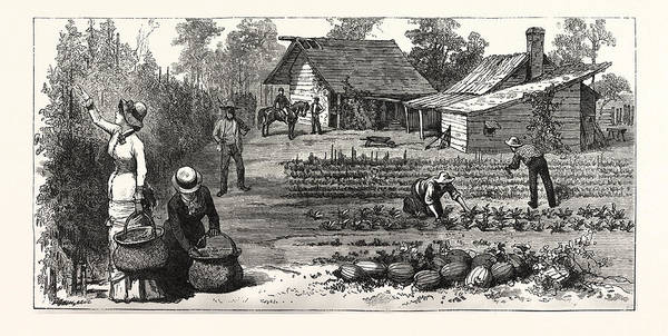 Early American History Drawing - English Garden. Scenes Rugby, The English Colony Tennessee by American School