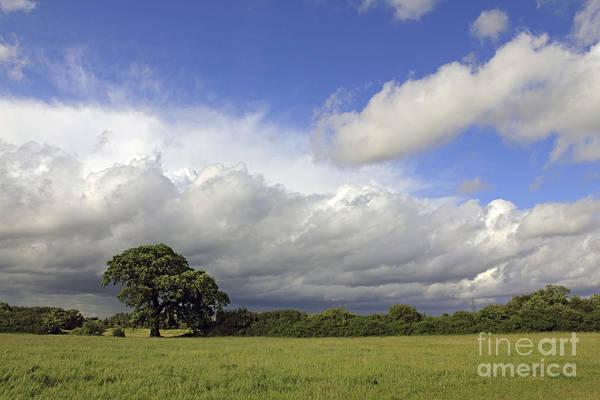 English Oak Under Stormy Skies Art Print