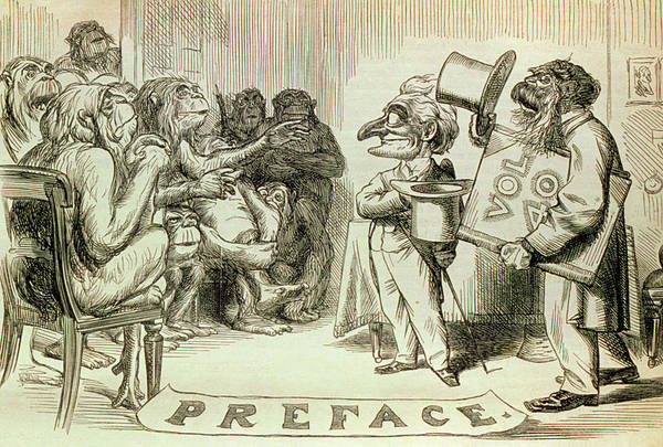 Evolution Photograph - Engraved Caricature Of Darwin's Evolution Theory by George Bernard/science Photo Library