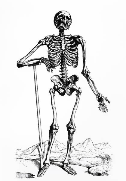 De Humani Corporis Fabrica Photograph - Engraving Of The Human Skeleton by Science Photo Library.