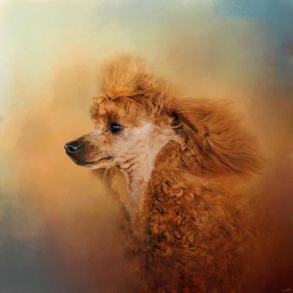 Photograph - Enjoying The Breeze - Apricot Poodle by Jai Johnson