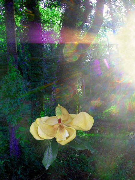 Photograph - Enlightened Magnolia by Anne Cameron Cutri