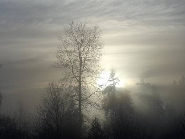 Alouette Wall Art - Photograph - Fog Of Enlightenment - Maple Ridge, British Columbia by Ian Mcadie