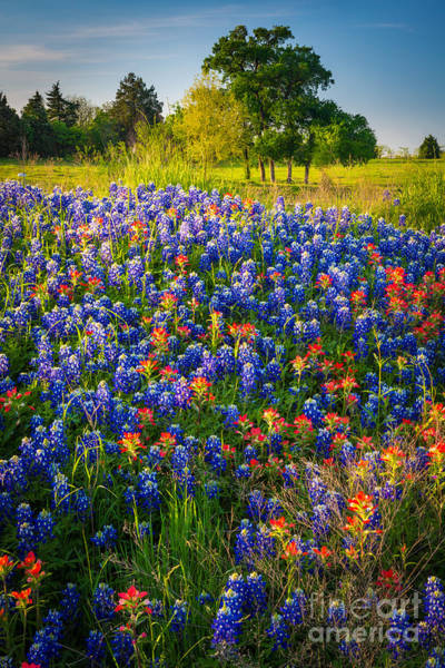 Mound Photograph - Ennis Bluebonnets by Inge Johnsson