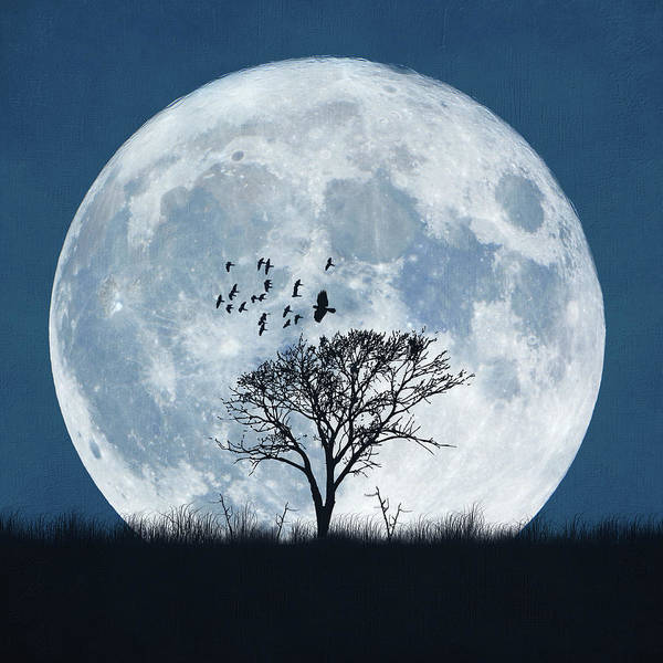 Photograph - Enormous Full Moon Behind Silhouetted by Viviana Gonzalez