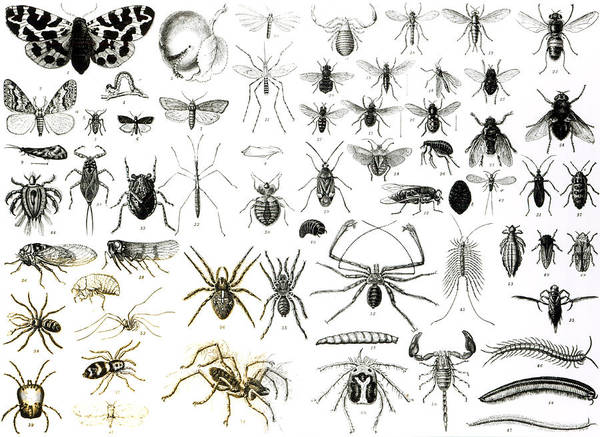 Entomology Myriapoda And Arachnida  Art Print