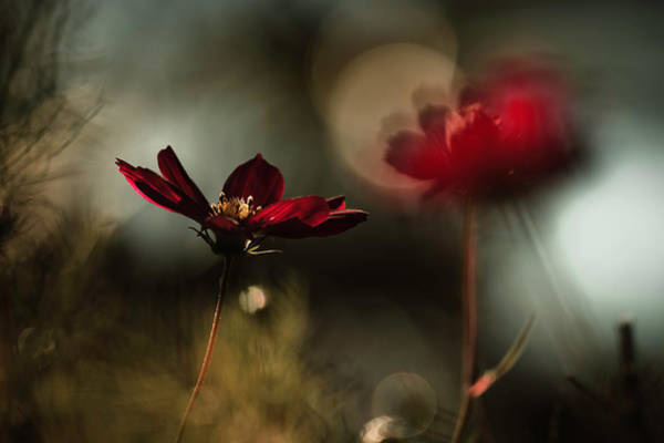 Romantic Flower Wall Art - Photograph - Entre Mysta?re Et Passion by Fabien Bravin