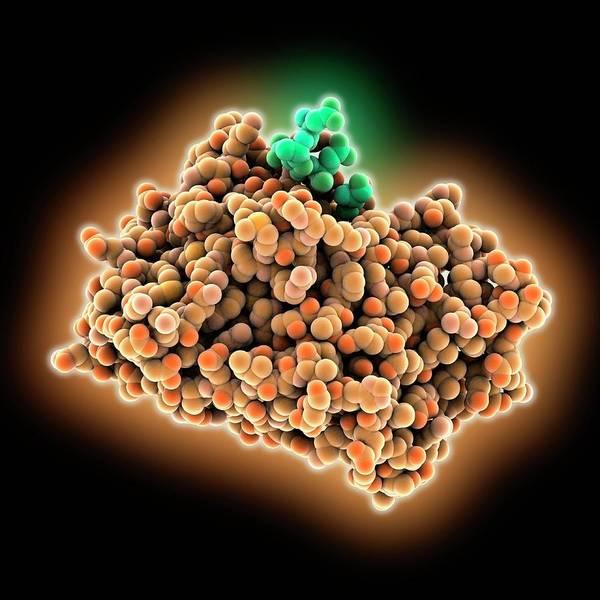 Biochemistry Photograph - Epidermal Growth Factor Receptor by Laguna Design