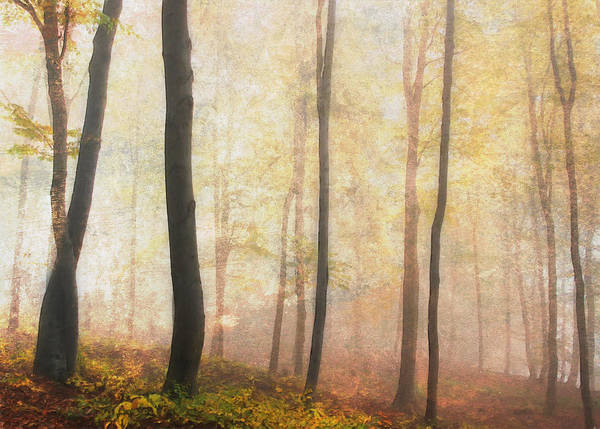Photograph - Equilibrium Of The Forest In The Mist by Isabella Howard