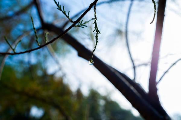 Photograph - Equilibrium by Tgchan