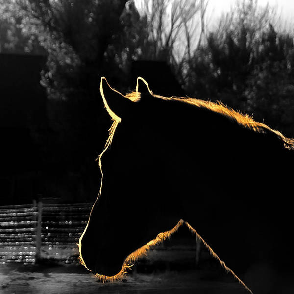 Steed Photograph - Equine Glow by Steven Milner