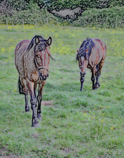 Wall Art - Photograph - Equine Investigation Pencil by Lori Aberle