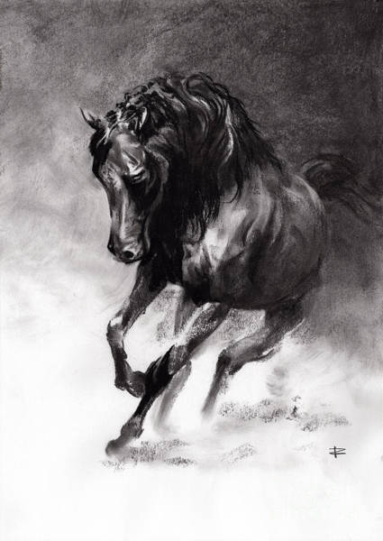 Bold Drawing - Equine by Paul Davenport