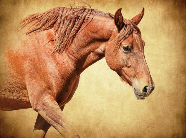 Wall Art - Photograph - Equine by Steve McKinzie