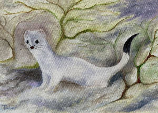 Painting - Ermine by FT McKinstry