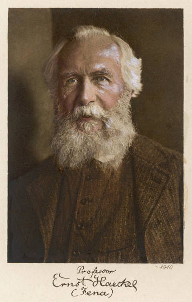 Wall Art - Drawing - Ernst Haeckel  German Scientist At Age by Mary Evans Picture Library