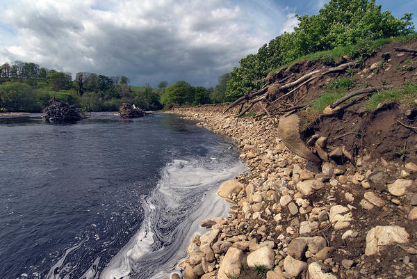 South Bank Photograph - Eroded Riverbank by Simon Fraser/science Photo Library