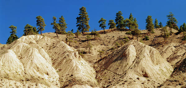 Water Erosion Photograph - Eroded Walls Of Nicola River Canyon by Kaj R. Svensson/science Photo Library