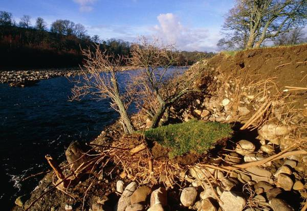 Water Erosion Photograph - Erosion And Flood Deposition Along A Riverbank by Simon Fraser/science Photo Library.