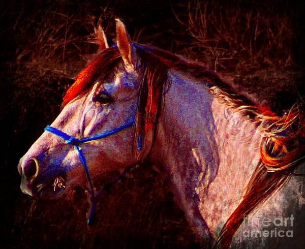 Photograph - Espirite Libre by John  Kolenberg