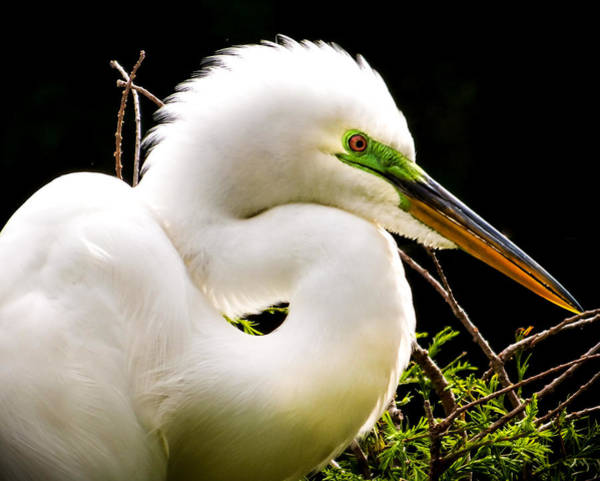 Egret Photograph - Essence Of Beauty by Karen Wiles