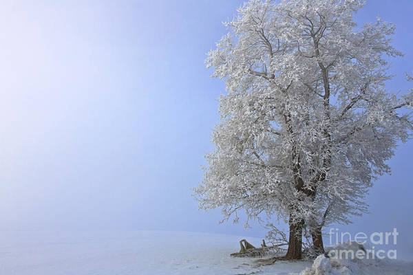 Photograph - Essence Of Winter by Beve Brown-Clark Photography