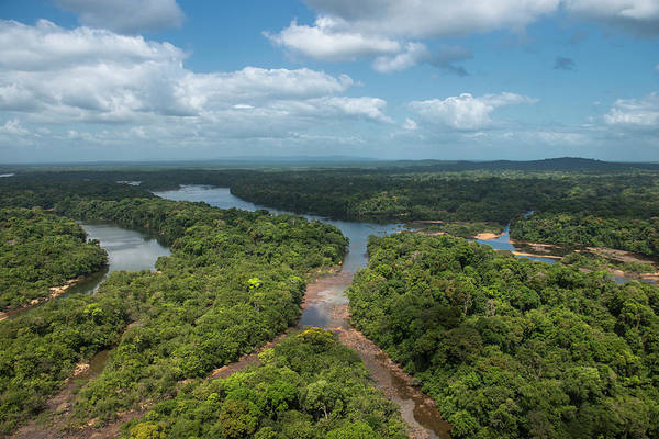 Braid Photograph - Essequibo River, Iwokrama, Rupununi by Pete Oxford