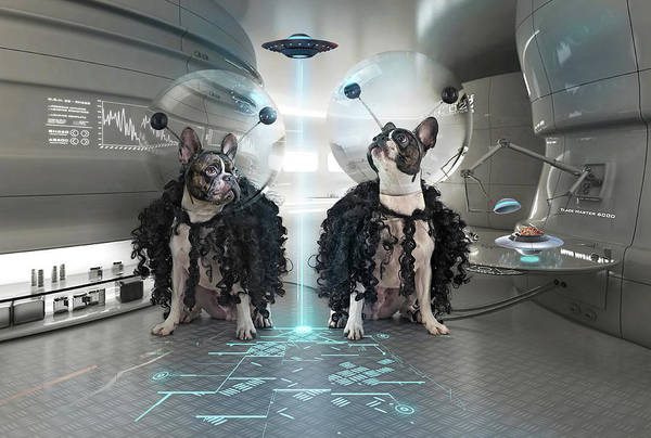 Future Photograph - Et Dogs by Ddiarte