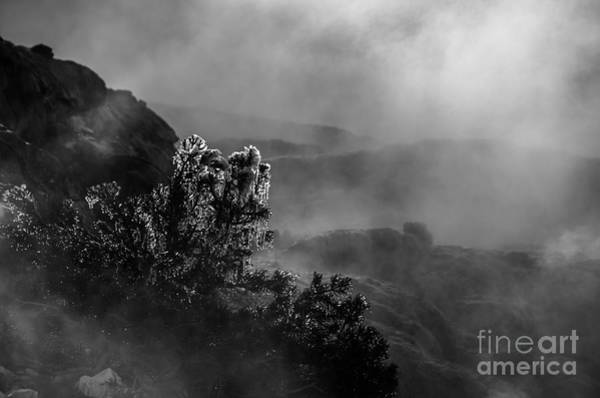 Photograph - Ethereal Beauty In Black And White by Sue Smith