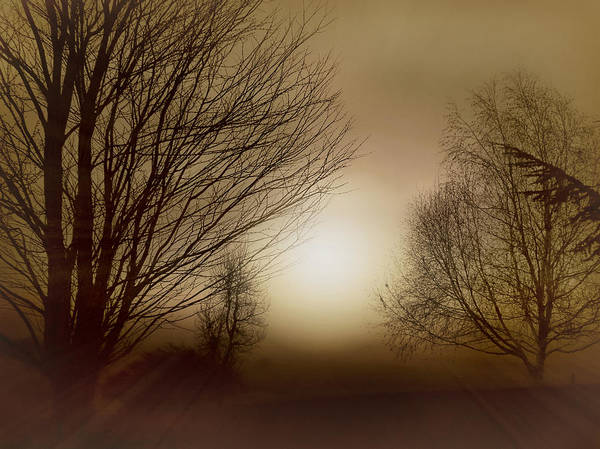 Photograph - Ethereal Evening by Micki Findlay