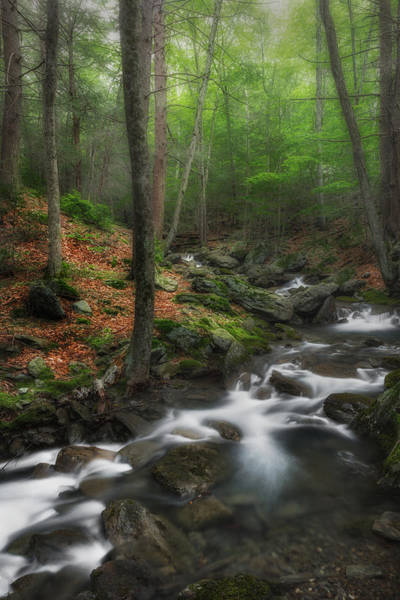 Photograph - Ethereal Forest 1 by Bill Wakeley