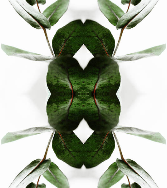 Wall Art - Photograph - Eucalyptus Leaves by Silvia Otte