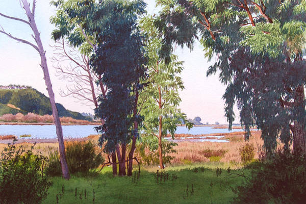 Southern California Painting - Eucalyptus Trees At Batiquitos Lagoon by Mary Helmreich