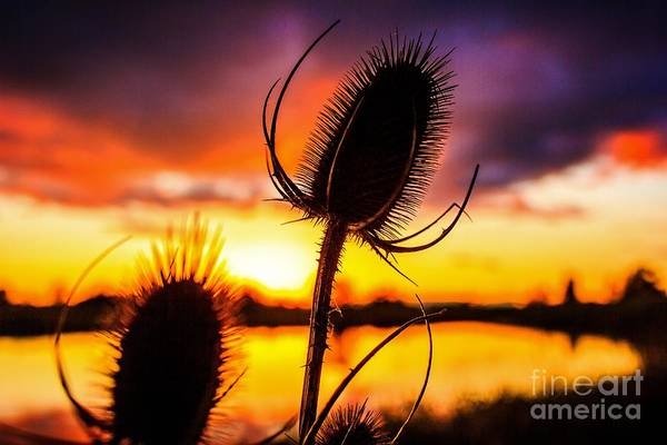 Photograph - Eugene. Oregon Wetland Sunset 2 by Michael Cross