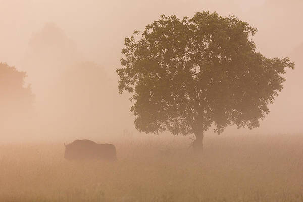 Wild Grass Photograph - European Bison by Aitor Badiola