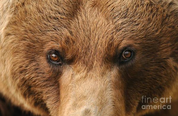 Reiner Photograph - European Brown Bear by Reiner Bernhardt