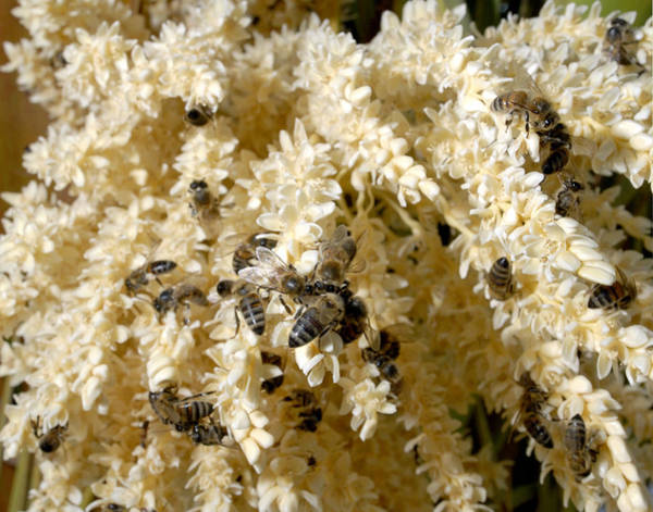Wall Art - Photograph - European Honey Bees by Theodore Clutter