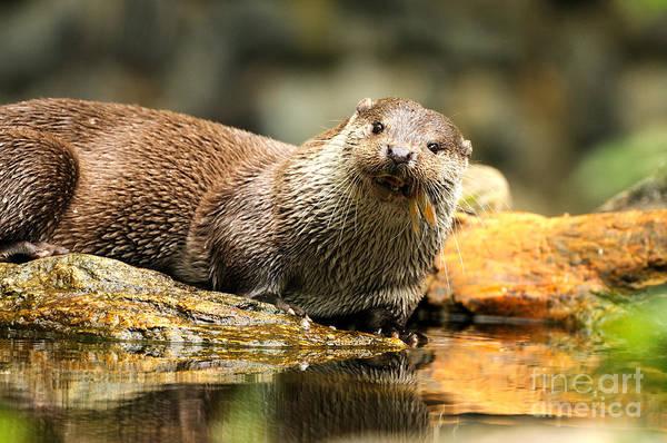 Reiner Photograph - European Otter by Reiner Bernhardt
