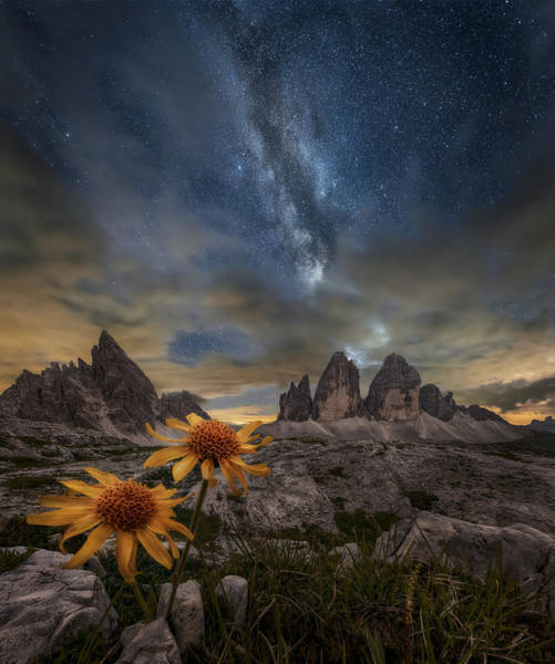 Wildflowers Photograph - Even The Flowers Seem To Be Fascinated By The Stars by Alberto Ghizzi Panizza