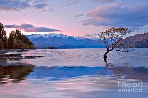 Wall Art - Photograph - Evening At Lake Wanaka by Sheila Smart Fine Art Photography