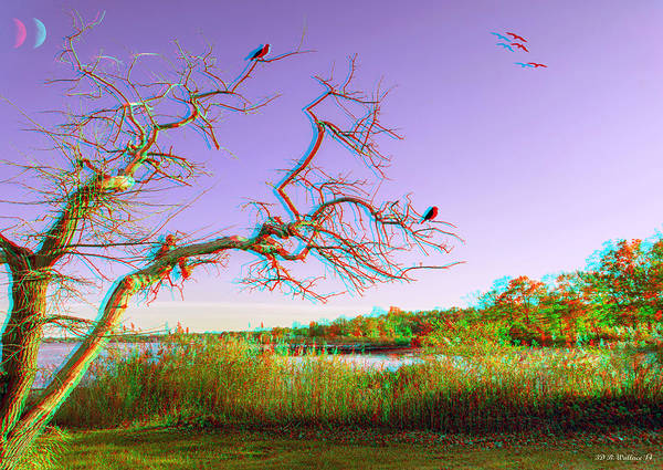 Anaglyph Photograph - Evening Branches - Use Red/cyan 3d Glasses by Brian Wallace