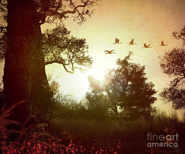 Digital Effect Photograph - Evening Flying Geese by Peter Awax