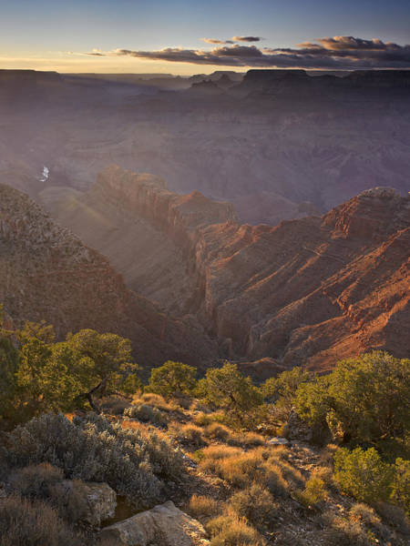 Evening Light At The Grand Canyon Art Print by Richard Berry
