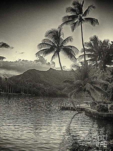 Cultivation Digital Art - Evening Light On The Wailua River Kauai by Charles H Davis