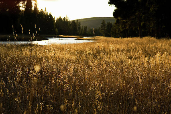 Coniferous Tree Photograph - Evening Light Shines Along The Banks by Keri Oberly